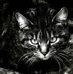 Centred Cat CC