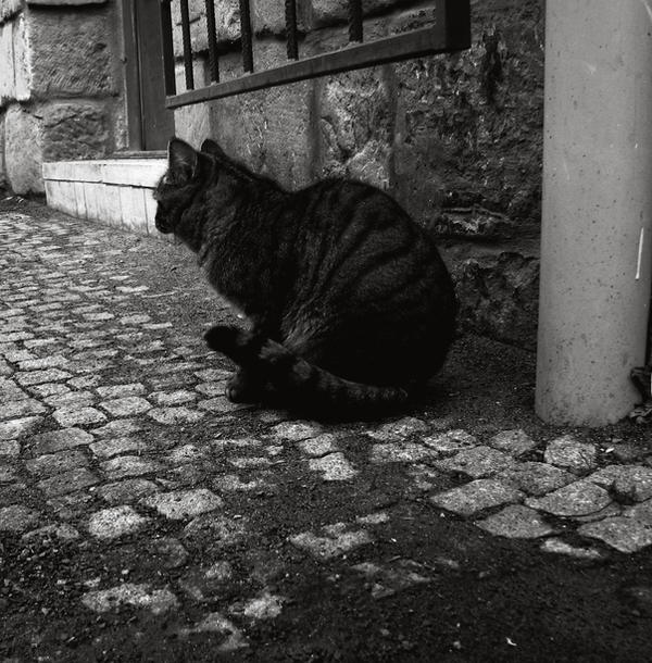 Silent Cat