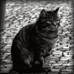 My Town Cat