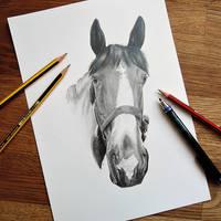 Horse (Commission)