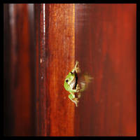Frog by tomeq