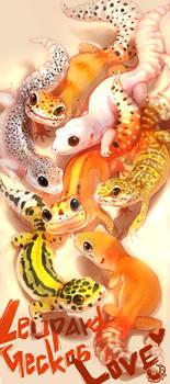 Leopard Geckos Love