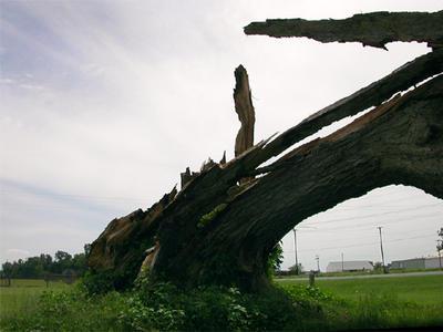 tree still Lives by robelicit