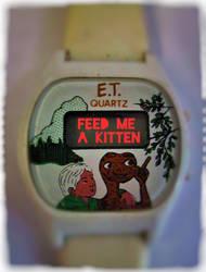 American Kitten by JBinks
