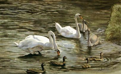Swan Group 3 by Keaneye