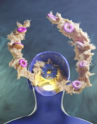 The Introspective Mind