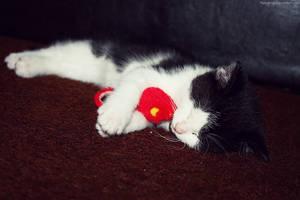 Sweet Dreams. by pasofino6