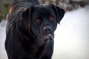 Good Dog. by pasofino6