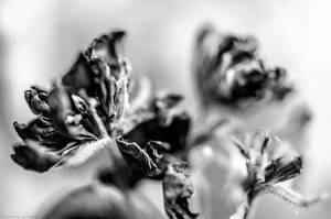 Flores 4 by carbajo