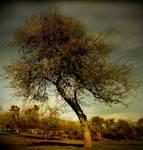 .: The Winter Tree :.
