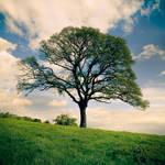 Spring Tree by DavidCraigEllis