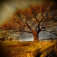 Winter Tree II Redux by DavidCraigEllis