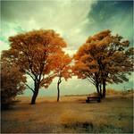 The Park by DavidCraigEllis
