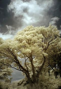 Infrared Tree II
