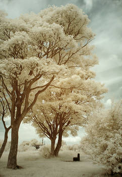 The Park Infrared