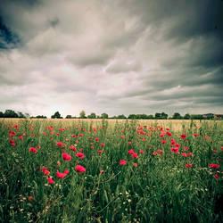 Dark Poppies by DavidCraigEllis