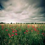 Dark Poppies