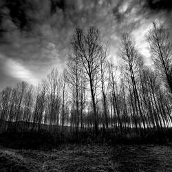 Backlight II by DavidCraigEllis
