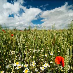 .: Summers Glory :. by DavidCraigEllis