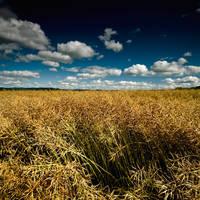 A Second Harvest by DavidCraigEllis