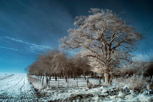 Orchard Infrared II by DavidCraigEllis