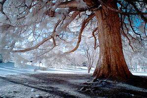 Secret Life Of Ghost Trees III by DavidCraigEllis