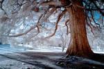 Secret Life Of Ghost Trees III