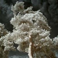 Secret Life Of Ghost Trees V by DavidCraigEllis
