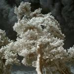 Secret Life Of Ghost Trees V