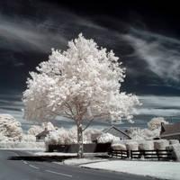 Urban Ghost Trees III by DavidCraigEllis