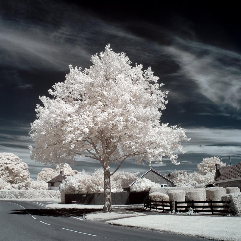 Urban Ghost Trees III by Dave-Ellis