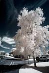 .: Bosbury Infrared II :.