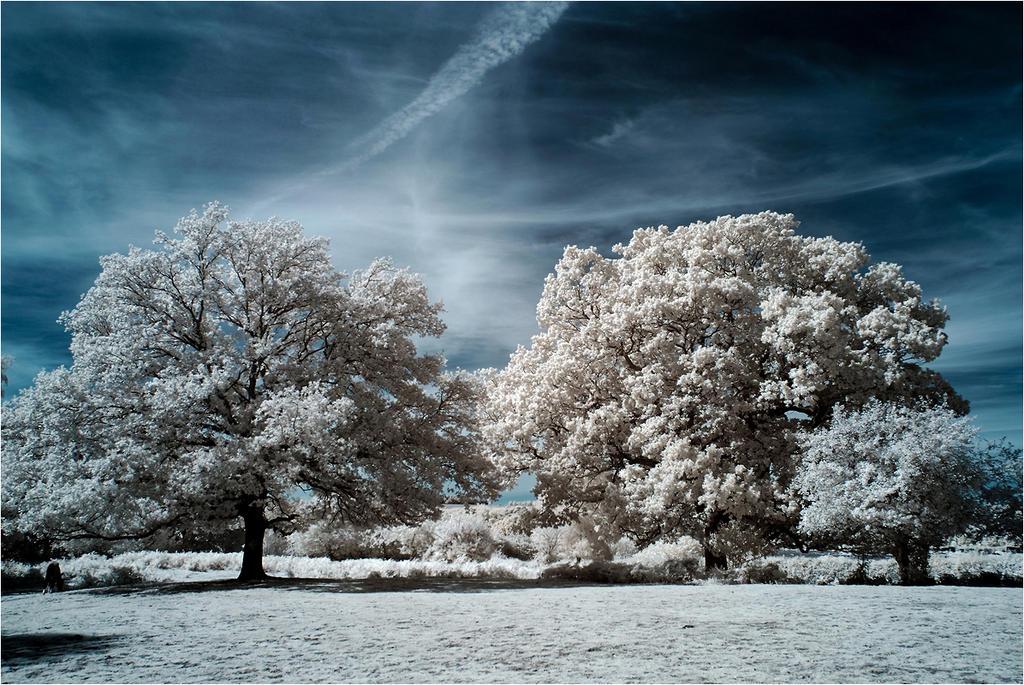 New Forest Infrared II by DavidCraigEllis