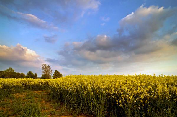 .: Herefordshire Skies :. by Dave-Ellis