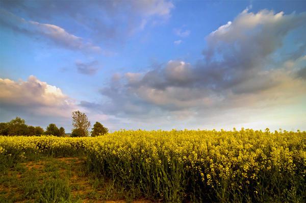 .: Herefordshire Skies :. by DavidCraigEllis