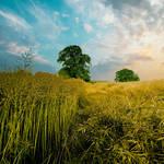Herefordshire New Skies 2 by DavidCraigEllis