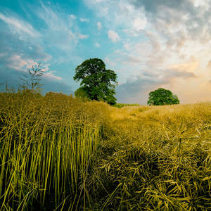 Herefordshire New Skies 2