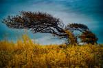 Windswept tree on Exmoor by DavidCraigEllis