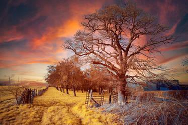 Infrared New Sky by DavidCraigEllis