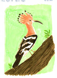 African Hoopoe - Avian August #6