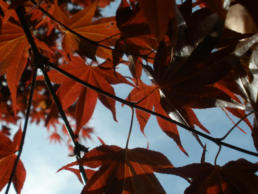 Redness of Fall by ginger-rock