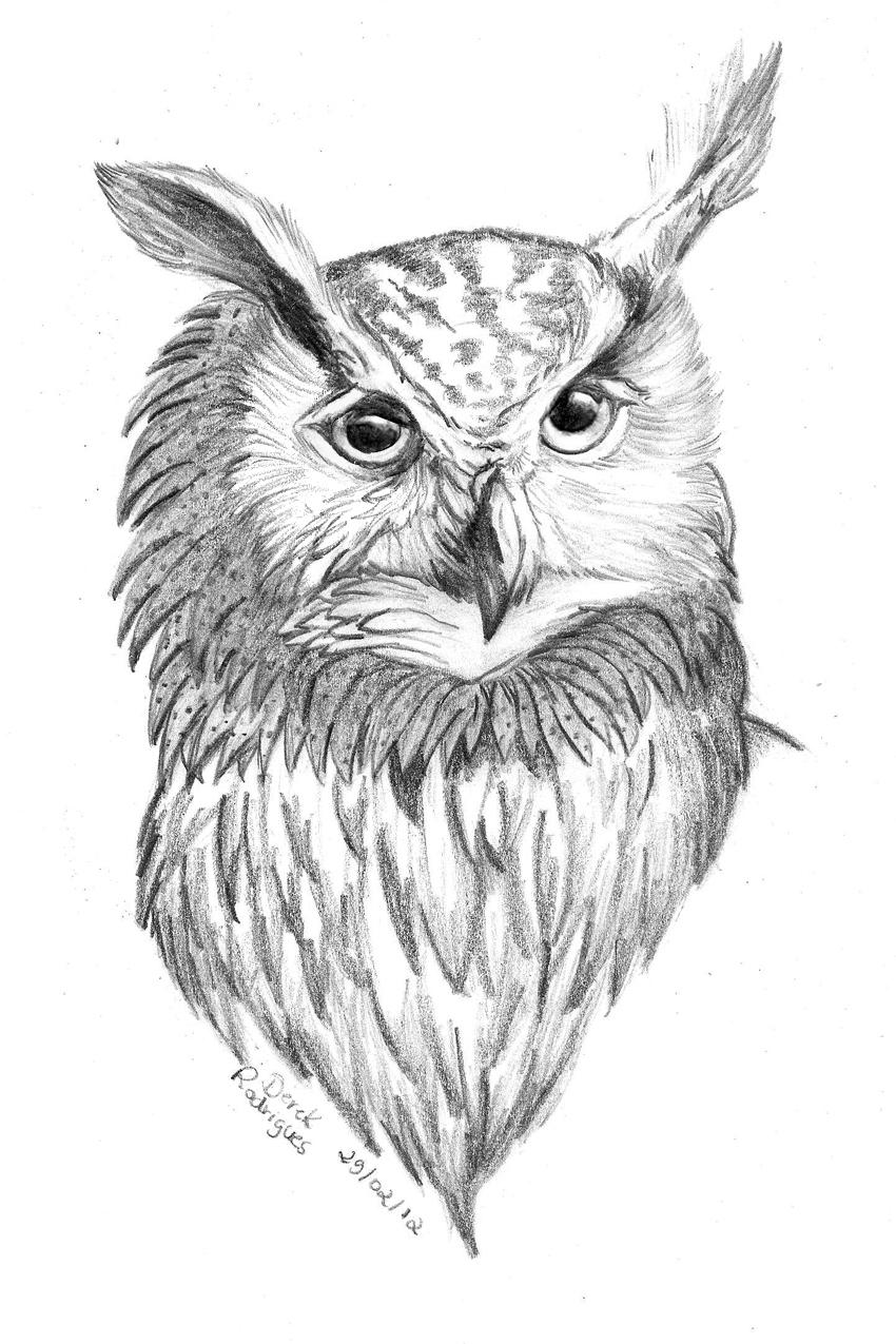 owl draw by derekpotter on deviantart