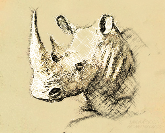 Rhino by Apolonis
