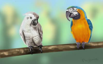 Birds #SecretSanta