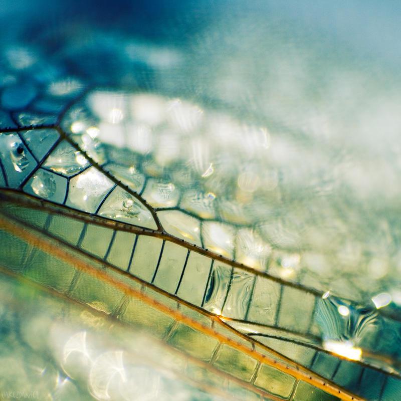 Stained glass... by JakezDaniel