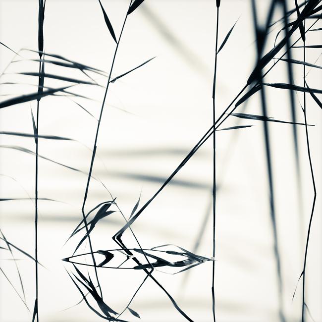 Quiet by JakezDaniel