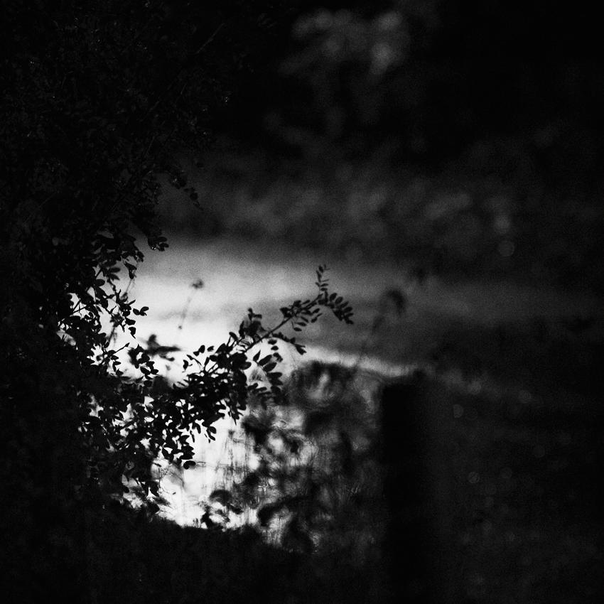 Nocturnal by JakezDaniel