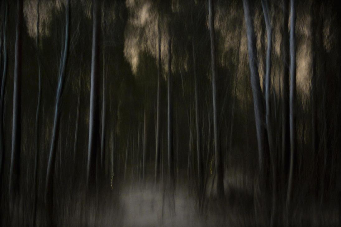 Nocturnal ballad in the woods by JakezDaniel