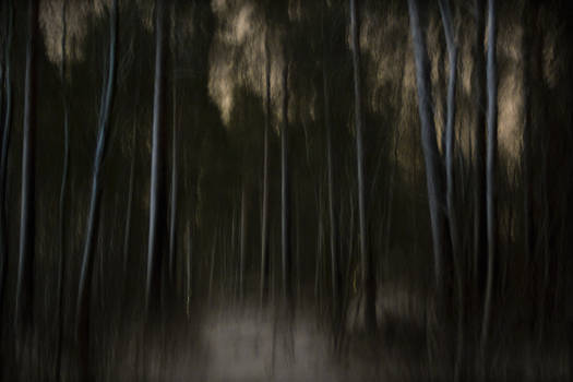 Nocturnal ballad in the woods