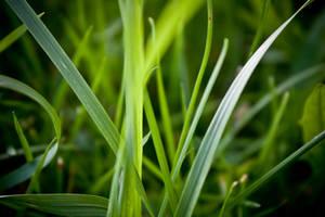 Summer Grass by darwin2kx